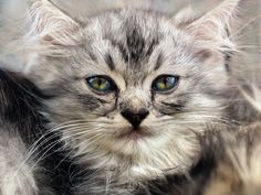 the face by Irawan Subingar on 500px. domestic cat
