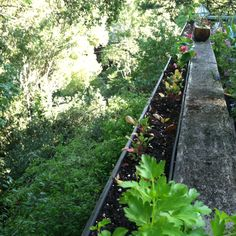 Attach rain gutters to the outside of deck railings and turn into herb garden