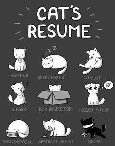 Cats resume