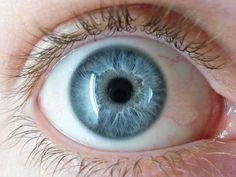 macro shots eyeballs - Google Search