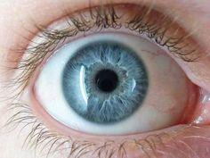 macro shots eyeballs - Google Search