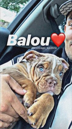 French Bulldog, Pitbulls, Rap, German, Iphone, Dogs, Animals, Wallpaper Backgrounds, Deutsch