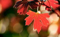 leaf 1080p high quality 1920x1200