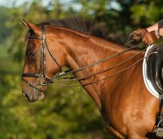 Draw Reins: A Good Teaching Tool Only IF ...