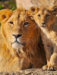 #animals #creatures