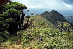 coromandel trees New Zealand, Trees, Mountains, Nature, Plants, Tree Structure, Flora, Nature Illustration, Off Grid
