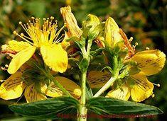 Herbs, Garden, Tips, Plants, Food, Garten, Lawn And Garden, Essen, Herb
