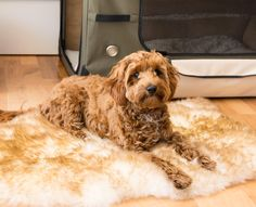Large Pet Beds, Large Dogs, Natural Shapes, Natural Rug, Very Small Dogs, Fluffy Bedding, Machine Washable Rugs, Medium Sized Dogs, Sheepskin Rug
