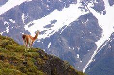 Fotos de Puerto Natales / Torres del Paine - Fotos, paisajes, postales