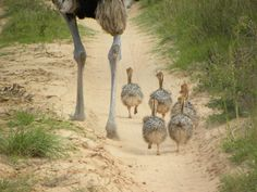 Follow the leader! Come safari with us: Follow The Leader, Vacations, Safari, African, Crafts, Travel, Holidays, Manualidades, Viajes