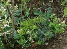 www.rustica.fr - Les aromatiques indispensables au jardin
