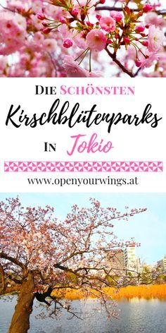 Im Übergang von März auf April ist es wieder soweit. Die Zeit der Sakura beginnt. Wenn die Kirschbäume, von den ersten warmen Sonnenstrahlen geküsst werden, beginnt ihre Metamorphose. Wie der Kokon einer Raupe öffnen sich ihre Knospen. Die zum Vorschein kommenden Blüten muten wie unzählige sich entfaltende weiße-, zartrosa-, magenta- und pinkfarbene Schmetterlinge an und lassen die Bäume in einem traumhaften Blütenkleid erstrahlen. Parks, Asia, Hotels, Around The Worlds, Poster, Travel, Japan Travel, Philippines, Bike Rides