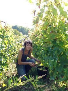 It's harvest time in Centre-Loire!  Photography: Juli Roumet