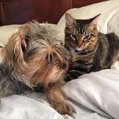 The odd couple #cat #dog #couple #cute