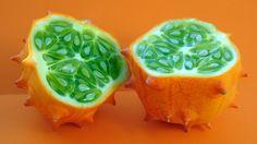Svima je poznata izreka da je jabuka na dan pola zdravlja, što je samo slikovita predstava značaja voća u ljudskoj ishrani. Voće sadrži puno vitamina, vlakana i malo kalorija, a najbolji je instant izvor šećera i energije.Širom sveta rastu stotine vrsta voća, svojstvenih i raznovrsnih po...