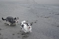 My two pups, Katie and Cody, having a blast on the beach.