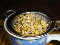 Trying To Quit Smoking? These 5 Herbs Will Completely Detox The Lungs - Natural Medicine Team Chamomile Tea Benefits, Chamomile Oil, Banana Cinnamon Tea, Herbs For Sleep, Herbs For Anxiety, Natural Sleep Remedies, Organic Herbs, Medicinal Herbs, Natural Medicine