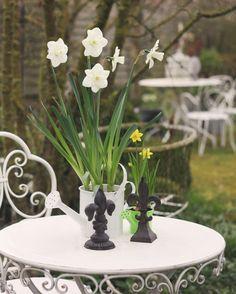 #Narcisse 🌳 #Frenchfarm #Spring #Printemps 🍃 #Garden #Gardening 🐇 #Narcissus #BonheurCampagne #Lebonheuràlacampagne 🍃 #Gardenlover #Springtime 🌳  #Flowers #Jardin 🍃 #Flowers #Countryside 🍃 #BnB #BedAndBreakfast #Chambresdhotes #Fleurs #Guesthouse 🌳 #Fleursdujardin 🍃 #FrenchBnB