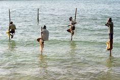 Sri Lanka« Ici aussi, comme pour les ouvriers du pétrole, les hommes - des pêcheurs - sont en suspension sur des piquets, mais c'est la mer qui leur donne la permission d'en extraire leur nourriture. » Nathalie MICHEL La pêche et l'aquaculture apportent à 4,2 milliard de personnes plus de 15% de leur consommation moyenne de protéines animales.