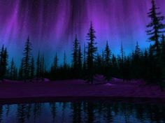 Amazing Christmas Purple Aurora Borealis In Norway!