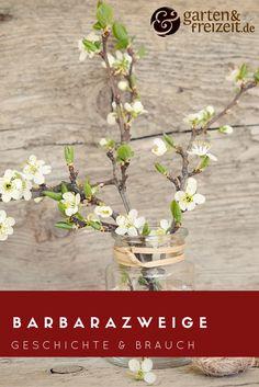 Barbarazweige - alles über Geschichte, Bräuche und die heilige Barbara #4.dezember #barbarazweige