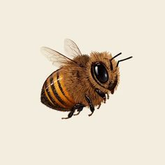 Mike Mitchell has three new art prints up for sale. These are timed-editions available till tomorrow (Friday, May at Central Time. Cute Drawings, Animal Drawings, Mike Mitchell, Bee Drawing, Art Mignon, I Love Bees, Cute Bee, Bee Art, Bees Knees