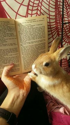 /r/rabbits is an open community where users can learn, share cute pictures, or ask questions about rabbits. Please note we are a *pet rabbit*. Cute Baby Bunnies, Funny Bunnies, Cute Babies, Bunny Bunny, Cute Little Animals, Cute Funny Animals, Pet Rabbit, Rabbit Toys, Rabbit Cages