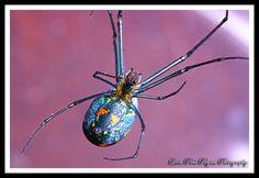 Metallic Silver Green Spider IV