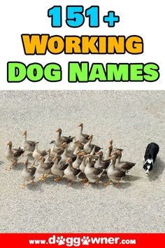 Do you have a working dog breed, or maybe just have a dog that helps with your work? Here are 150+ working dog names. #workingdognames #dognames