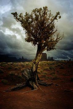The Tree, Monument Valley Navajo Tribal Park, Arizona; photo by Ellen Lacey