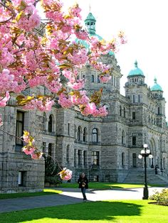 Spring blossoms in Victoria  historic Parliament building in the spring ..Located in Victoria, British Columbia and officially opened in 1...