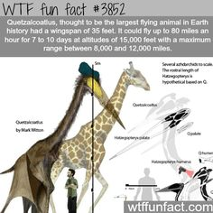 The largest flying animal ever - WTF fun facts
