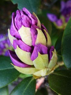 again purple and yellowish green