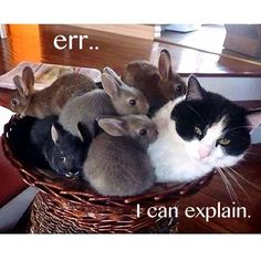 So many bunnies in one basket! Oh and a cat, but who cares about the cat?