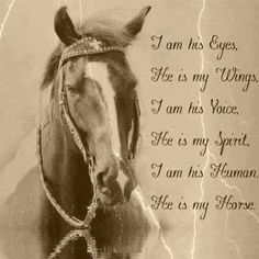 he is my horse ❤️