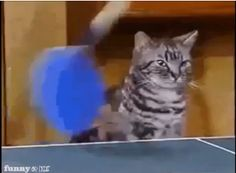 Two cats play an epic game of ping pong.