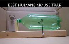 Confectionnez un piège à rats ou souris efficace et sans les tuer - Astuces de grand mère