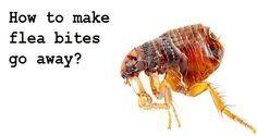 Flea Bites on Humans – Identification, Prevention, and Eradication - http://spiderbites.net/flea-bites/