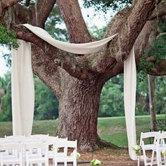 if we have an oak tree to get married under