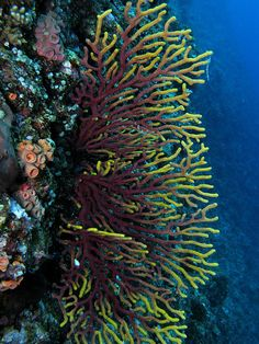 Underwater Colors Okinawa  Japan I hope to someday snorkel there and see those beautiful colors!!!!