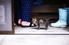 {kitten & boots} on Cat Island, Japan - by yugoroyd, via Flickr