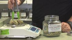 Buy OG-kush in Bulk - Kingston Flavours Cannabis Seeds Online, Cannabis Seeds For Sale, Cannabis Vape, Medical Marijuana, Marijuana Butter, Growing Marijuana Indoor, Cannabis Growing, Cannabis Plant