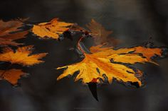 Memories of fall by Dejan Janev on 500px