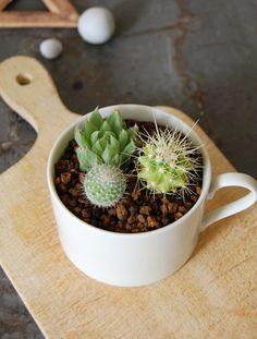 Ceramic mug x 金鯱寄せ植え