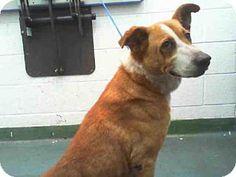 Miami, FL - Labrador Retriever Mix. Meet MARY, a dog for adoption. http://www.adoptapet.com/pet/12392573-miami-florida-labrador-retriever-mix