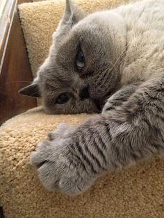 Lexi the cat ~ Look at the size of that paw!