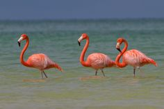 Flamingo's at Isla Holbox, Mexico by Joep K on 500px