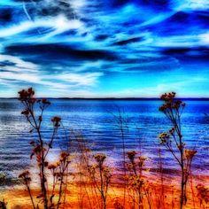 Seaside Flowers by www.thephotomomma.com