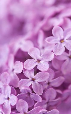 You can specify any bloom which you like and enjoy its look. Floating flowers will perfectly decorate the screen of your phone. Flower Wallpaper, Screen Wallpaper, Iphone Wallpaper, Lilac Background, Background Images, Live Picture, Floating Flowers, Lilac Flowers, Photo Craft
