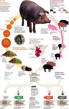 Infografia sobre el jamón ibérico